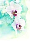 Flower watercolor illustration. Stock Photos