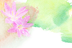 Flower watercolor illustration. Royalty Free Stock Photo
