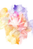 Flower watercolor illustration. Watercolor painting on paper illustration of blossom rose. Artistic floral abstract background vector illustration