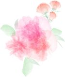 Flower watercolor illustration vector,digital painting flower Royalty Free Stock Photography