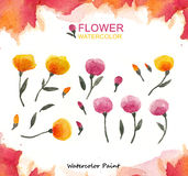 Flower, Watercolor paint high resolution Stock Photography