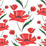 Flower watercolor pattern with poppies. Vector Stock Image