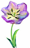 Flower, watercolor Stock Image