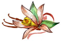 Flower watercolor sketch bouquet Royalty Free Stock Images