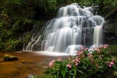 Flower Waterfall Stock Photography