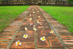 Flower way. stock images