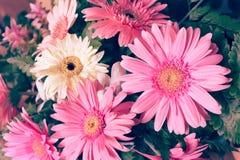 Flower wedding decoration, beautiful gerbera flower blooming Royalty Free Stock Photo