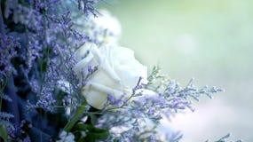 Flower wedding pastel romactic background Stock Photos
