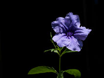 Flower of the weeds. Low key isolate  black nature light Stock Photos