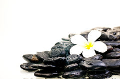 Flower on wet black zen stones Stock Image