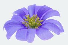 Flower on white Royalty Free Stock Photos