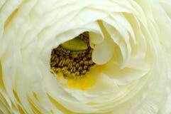 flower white 免版税图库摄影