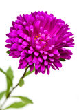 Flower on white background Stock Photography