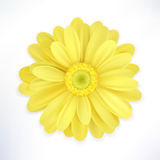 Flower on white background. Realistic vector image. stock illustration