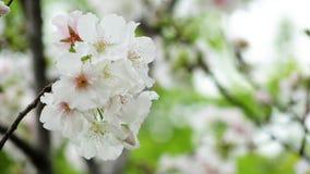 Flower, White, Blossom, Spring Stock Photos