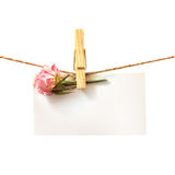 Flower and white card with clothes peg isolated Royalty Free Stock Photography