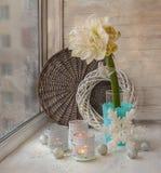 Flower white double Hippeastrum on winter window Royalty Free Stock Photos