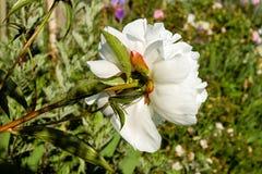 Flower, White, Flora, Plant royalty free stock photos