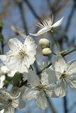 Flower, White, Flora, Spring Stock Photography