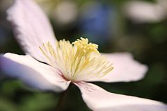 Flower, White, Flora, Yellow Stock Photo