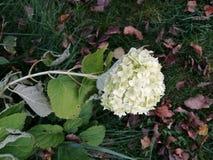 Flower. White flower on green grass Royalty Free Stock Images