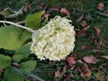 Flower. White flower on green grass Stock Photos