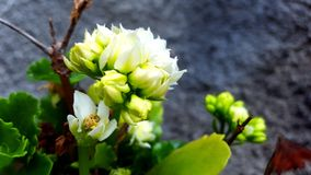 Flower. White green nature fresh Royalty Free Stock Photography