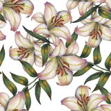 Flower, white lily,watercolor, bouquet, pattern seamless. White flower  lily watercolor handmade  background  bouquet pattern seamless Royalty Free Stock Images