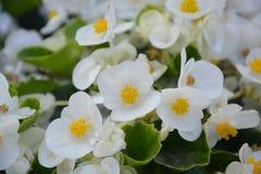 Flower, White, Nature, Green Stock Photo