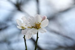 Flower white in nuture in winter royalty free stock photography