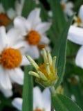 Flower. White orange green Stock Photography
