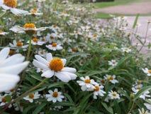 Flower. White orange green Stock Photo