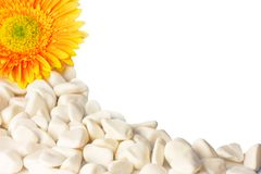 Flower and white pebbles isolated on white Royalty Free Stock Photos