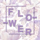 Trendy poster with blooming white peonies. Spring background in pastel purple tones. Floral spring graphic design. Can be used as an interior poster, print for stock illustration