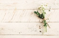 Flower, White, Petal, Bloom, Garden Royalty Free Stock Photo