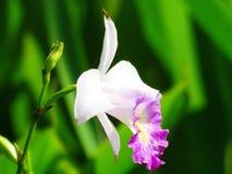 Flower, White, Pink Stock Photos
