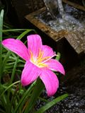 Flower white pink red green purple yellow nature beautiful background Royalty Free Stock Photo