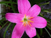 Flower white pink red green purple yellow nature beautiful background Royalty Free Stock Photography