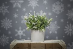 Flower on a gray background with white snowflakes Stock Image