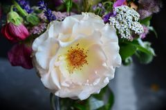 Flower, White, Rose Family, Rose Royalty Free Stock Photo