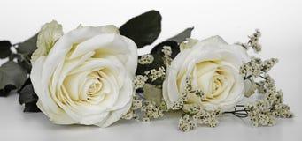 Flower, White, Rose, Rose Family
