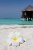 Flower on a white sandy beach Stock Photo