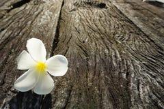 Flower. White sunrise wood background beautiful Stock Photography