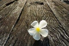 Flower. White sunrise wood background beautiful Royalty Free Stock Images