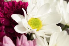 Flower, White, Yellow, Flowering Plant royalty free stock photos