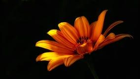 Flower, Wild Flower, Flowers Royalty Free Stock Image
