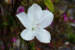 Flower Wild Roses Stock Photo
