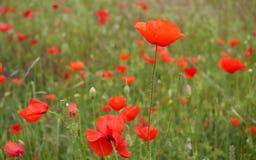 Flower, Wildflower, Field, Vegetation stock photography