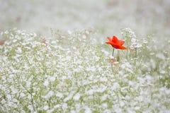 Flower, Wildflower, Flora, Spring Stock Photos