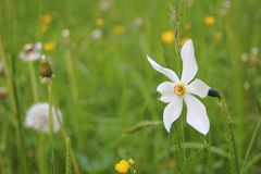 Flower, Wildflower, Flora, Vegetation Stock Photo